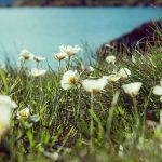 Flores Anodrra